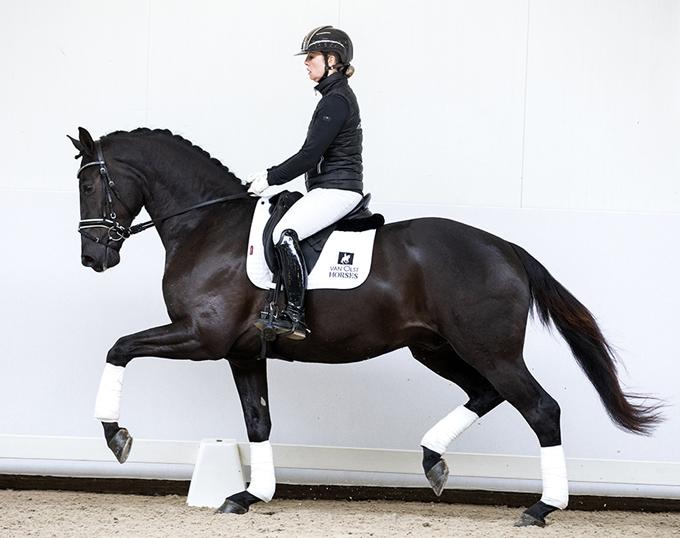2019 Van Olst Sales' Horse in the Spotlight: Loverdale W