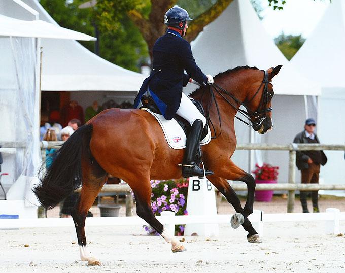 FEI Dressage Horse for Sale: Dimaggik