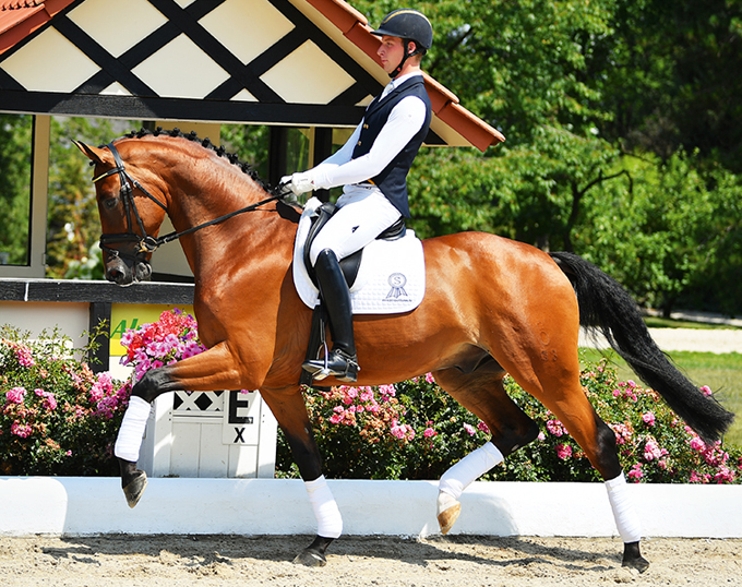 2018 PSI Auction Horse in the Spotlight: Bocca di Bacco