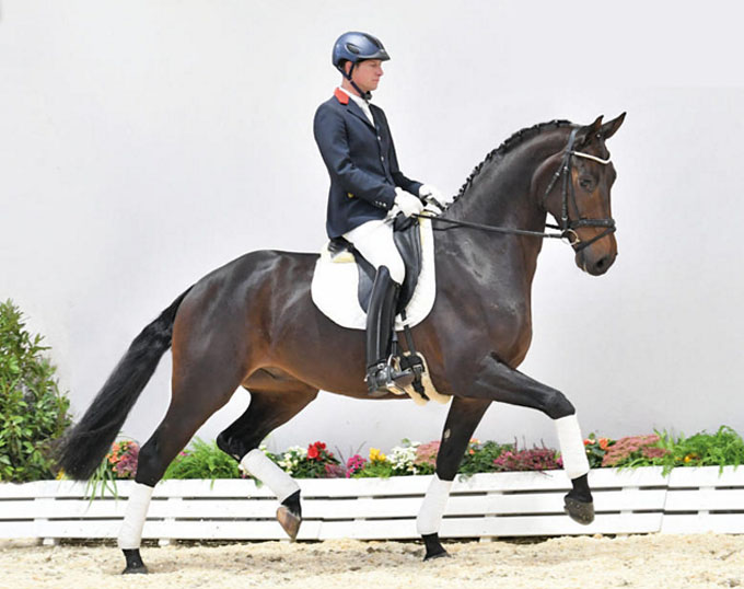 Christiano, Best Seller at the 2018 Oldenburg Winter Mixed Sales