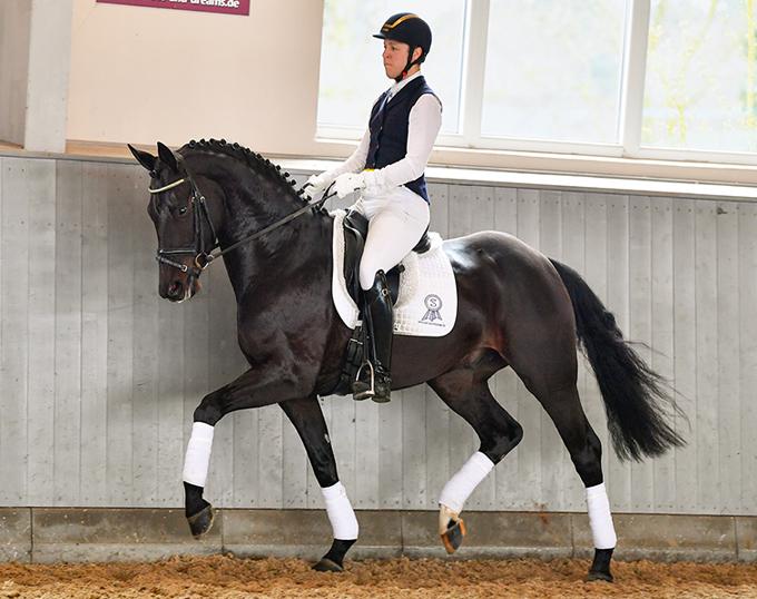 2019 Horses & Dreams Online Auction - Spotlight on D'Artagnan