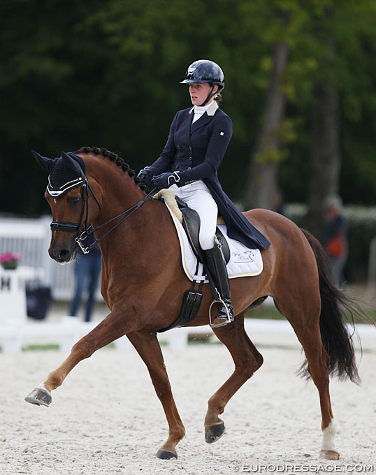 Belgian Long Listed Horses For The 2019 World Young Horse