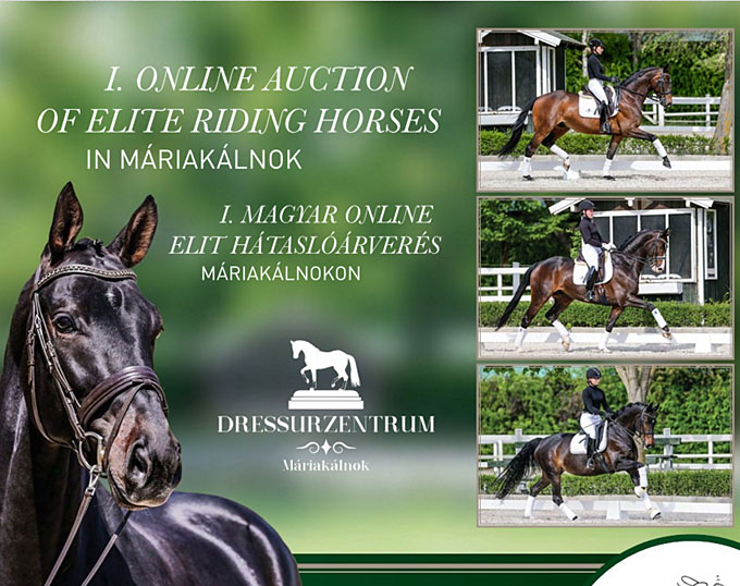 First Online Auction Of Elite Riding Horses In Hungary At Mariakalnok Dressage Centre