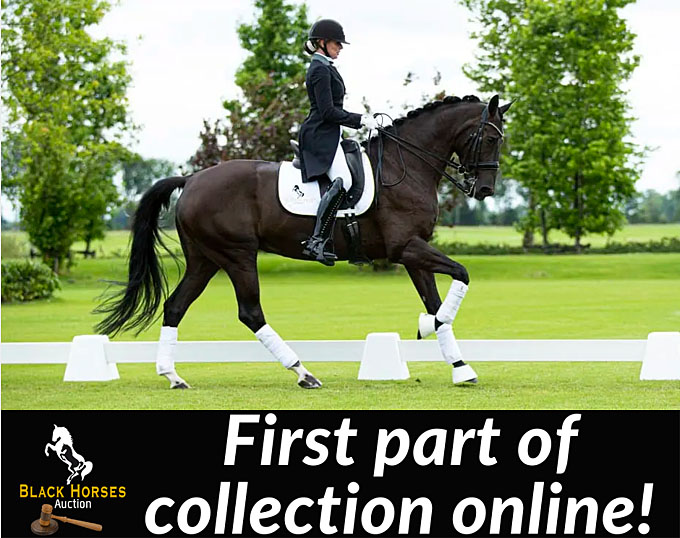 Brood Farm Black Horses To Sell Its Exclusive Dressage Horses In Online Auction On 1 August 2020