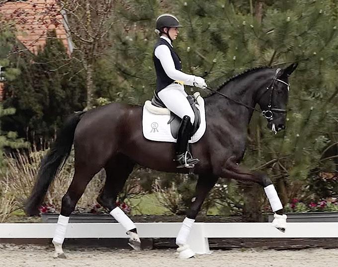 Fleur de Cherie, Top Seller of the 2021 Horses & Dreams Online Auction