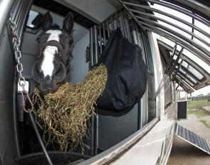 Horse ready for transport :: Photo © Dirk Caremans