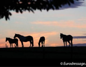 Horses in the sunset :: Photo © Astrid Appels