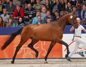 Kameraad (by Eye Catcher x Rousseau) at the 2018 KWPN Stallion Licensing :: Photo © Dirk Caremans