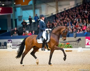 Guardian S at the 2018 KWPN Stallion Licensing :: Photo © Digishots