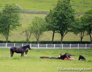 Good housekeeping: horses turner out in the field :: Photo © Astrid Appels