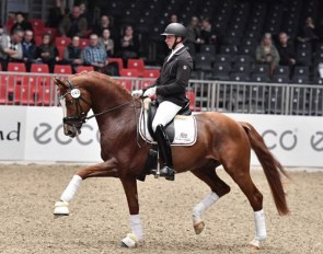 Jan Gawecki and Heiline's Zanzier at the 2018 Danish Warmblood Stallion Licensing
