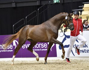 Liam G (by Londontime x Belissimo M) at the 2018 Danish Warmblood Stallion Licensing in Herning :: Photo © Ridehesten