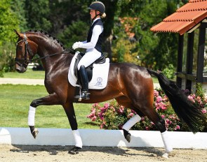 Forza (by Furstenball x Sir Donnerhall x Don Schufro)