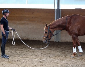 Warwick McLean training a young horse :: Photo © Astrid Appels