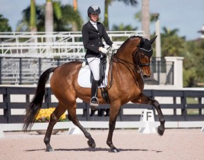 Nexolia Dressage's Glenn S&S competing in Wellington, Florida