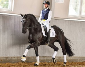The 2018 Horses & Dreams Online Auction price highlight, De Royal (De Niro x Royal Dance x Donnerhall)