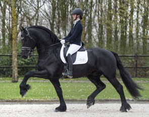 FHS Rienk, first Friesian to be auctioned in the 2019 Excellent Dressage Sales