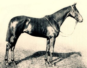 The WFFS gene mutation has been traced back to Bay Ronald xx, maternal great great grandsire of Furioso xx
