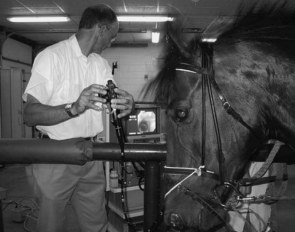 Horse cantering on treadmill wearing Myler correctional-ported barrel bit. Penrose tubing anchoring the endoscope is seen running from the left side of the noseband to the right nostril, and side reins attached to the bit flex the atlanto-occipital joint. Video monitor and VCR can be seen in the background :: Photo © H. Clayton