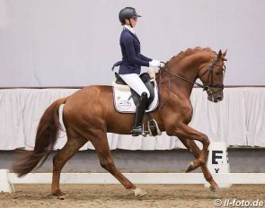 Fonq at the February 2019 Stallion Sport Test in Verden :: Photo © LL-foto