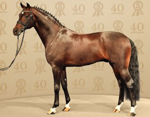 For Romance II (by Furst Romancier x Sir Donnerhall x Don Schufro x Sandro)