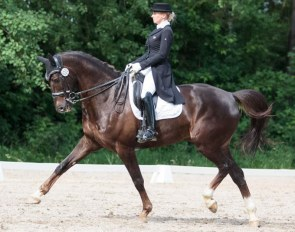 Internationally competed Grand Prix horse Jazzpoint (by Westpoint x Nubertus R)