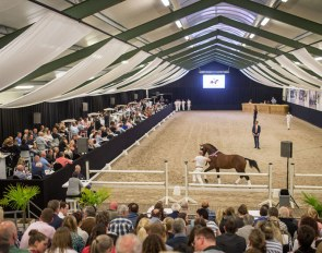 Van Olst Sales is an annual auction of top bred young dressage horses in The Netherlands