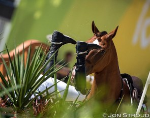 Life with horses has been turned upside down due to the corona pandemic :: Photo © Jon Stroud