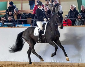 Fortnite (by For Romance x Don Schufro), champion of the 2020 Swedish Warmblood Stallion Testing :: Photo © Ronald Thunholm