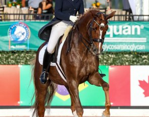 International Grand Prix horse Frankie (by Florencio x A Jungle Prince) :: Photo © Sue Stickle