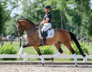Lionel (by Toto Jr x Olivi) is part of the first online auction of Dutch Dressage Stars