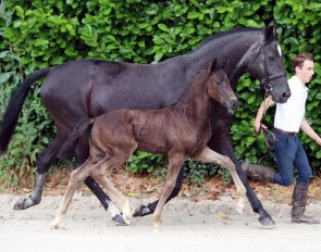 LOT 3 - Colt by Secret x Negro