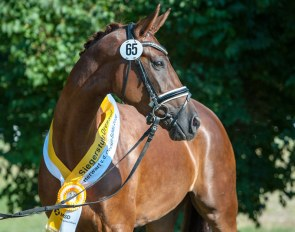 Romy, champion of the 2020 Hanoverian Elite Mare Show