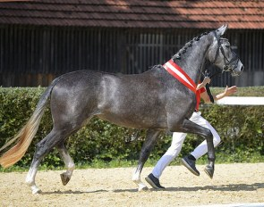 Novara MB, champion of the 2020 Austrian Warmblood Mare Championship :: Photo © Team Myrtill