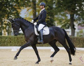 Martin Hauptmann and Dark Knight Rises at the 2020 Austrian Warmblood Young Horse Championships :: Photo © Team Myrtill