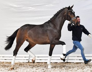 Found the World (by Foundation x Dante Weltino) - The combination of two international Grand Prix horses FOUNDATION and DANTE WELTINO OLD