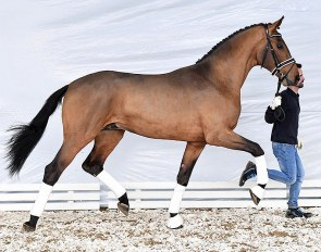 Valverdo (by Valverde out of Farosa PS/Simply Fine, the bronze medalist at the national Championships for young horses)