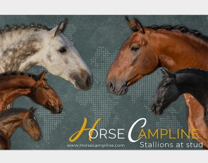 Horse Campline's 2021 stallion roster with four international Grand Prix stars