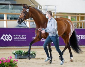 Patrik Kittel and Well Done de la Roche CMF passed the vet check but withdrew from competing at the 2021 CDI Doha