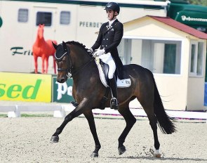 FEI Dressage Horse for Sale: Treffinger's Standing Ovation