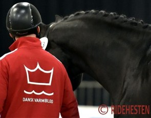 Danish Warmblood and Helgstrand Dressage arm-wrestle about breeding permission :: Photo © Ridehesten