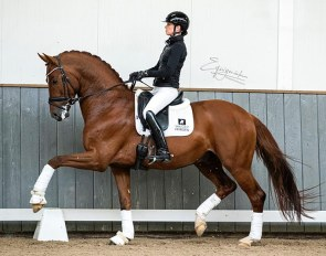 Charlotte Fry on the 5-year old Lantanas :: Photo © Equigeniek