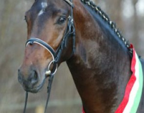 Rosencharmeur, Champion of the 2002 Westfalian Stallion Licensing