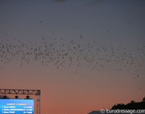 Birds flying over the Windsor arena at dusk