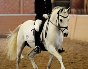 Luca Michels & Dein Freund started off with bad luck. Just when the bell rang the stallion spooked & Luca had no choice but to begin the test. The boy kept his nerve, though, and the pair showed a lovely canter tour with textbook connection.