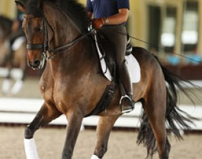 Chris Hickey on his new small tour horse, the gorgeous Danish warmblood gelding Ronaldo (by Romanov x Don Schufro)