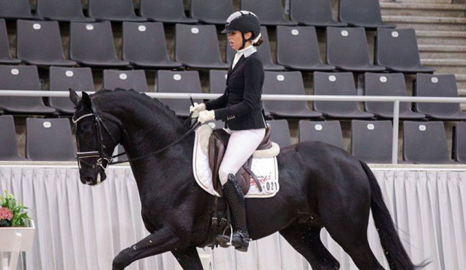 Dancier Gold at the 2019 Verden Stallion Sport Test :: Photo © LL-foto