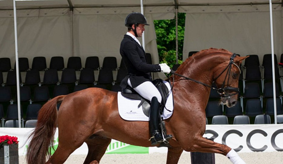 Severo Jurado Lopez and the Swedish warmblood stallion Springbank II are qualified for Ermelo