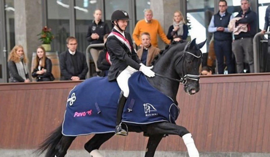 Thomas Sigtenbjerggaard on Kardieno at the 2019 Danish Young Horse Championships :: Photo © Ridehesten