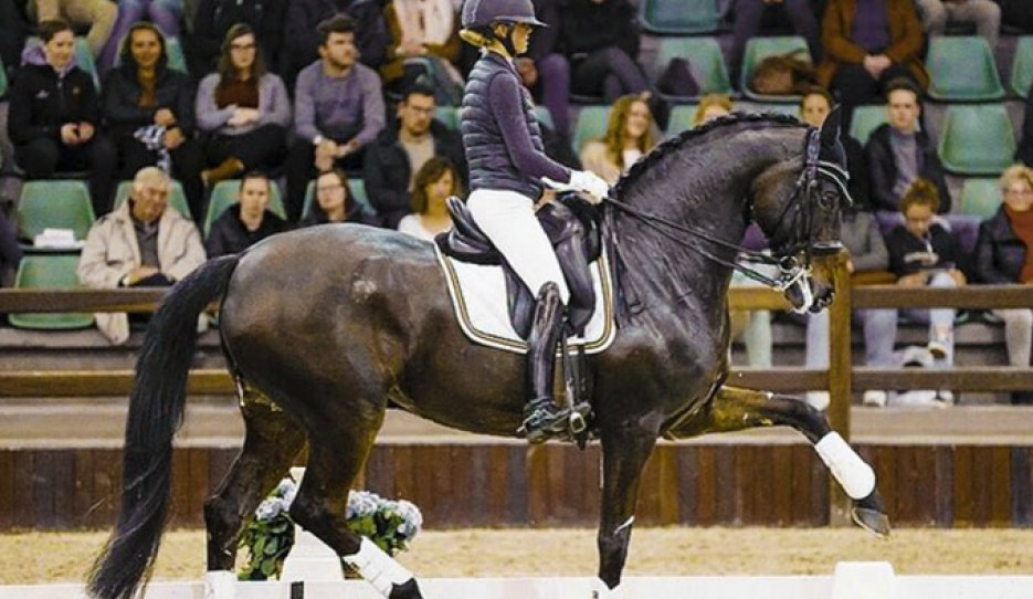 Alexa Fairchild and Dabanos d'O4 in a clinic with Tineke Bartels at the 2020 CDI Lier :: Photo © Leanjo de Koster